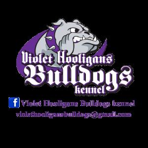 Violet Hooligans Bulldogs Kennel