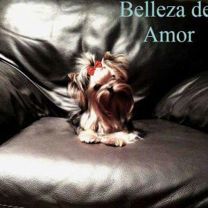 Belleza Del Amor