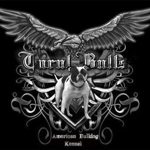 Turul Bulls American Bulldog Kennel