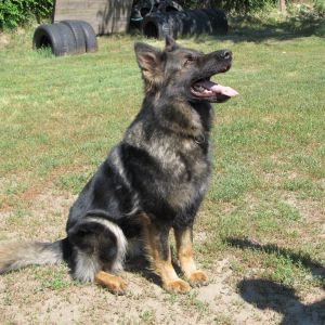 Canis Grex Kennel