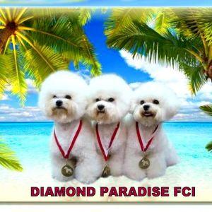 Diamond Paradise Fci