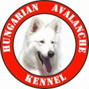 Hungarian Avalanche Kennel