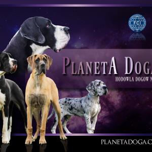 Planeta Doga Fci