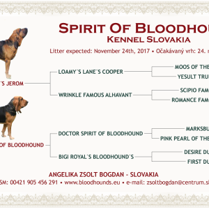 Spirit Of Bloodhound