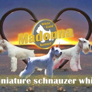 White-gold Madonna