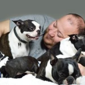 Boston Terrier - Big Bos Tons