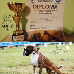 Cser-tői Boxer Kennel