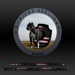 American Hooligans Kennel