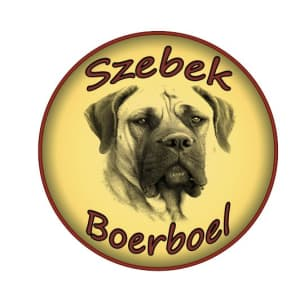 Szebek Boerboel
