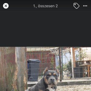 Hyper Beast Bully Kennel