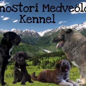 Monostori Medveölő Kennel