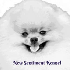 New Sentiment