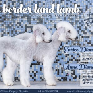 The Border Land Lamb