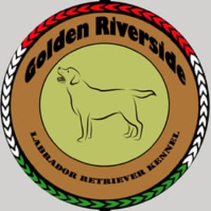 Golden Riverside Kennel