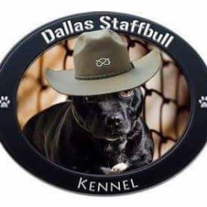Dallas Staffbull