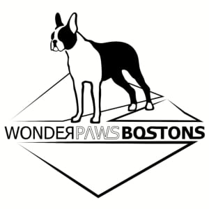 Wonderpaws Boston Terrier Kennel