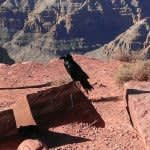 grand canyon west rim helicopter landing tour