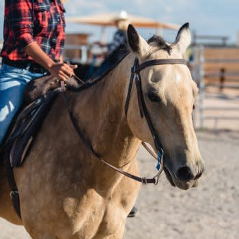 GRAND CANYON WEST RIM HOTEL CABIN STAY HUALAPAI RANCH HORSE RIDING