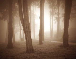 Woods, Study I