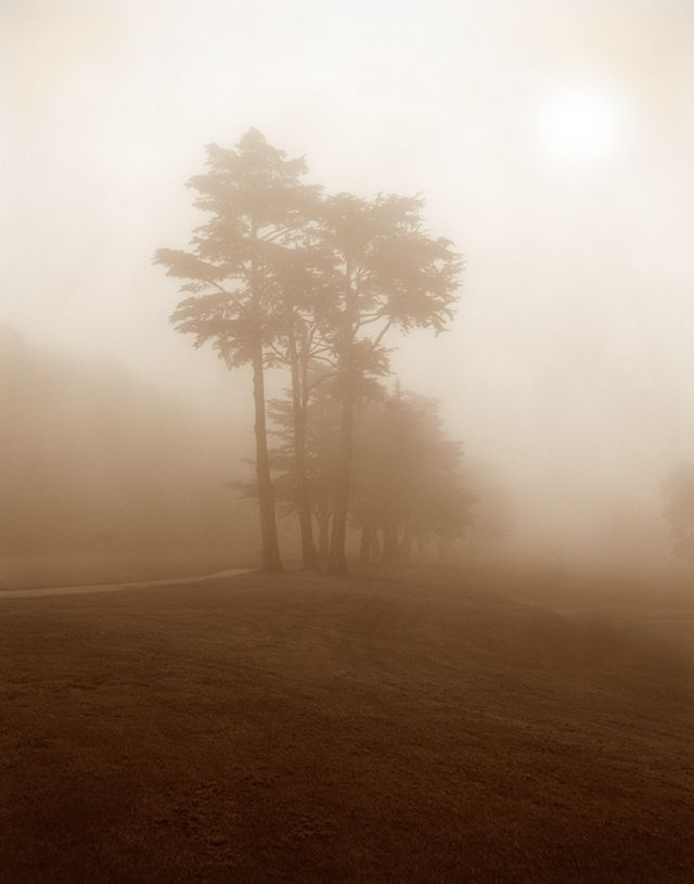 Ghost Cedars