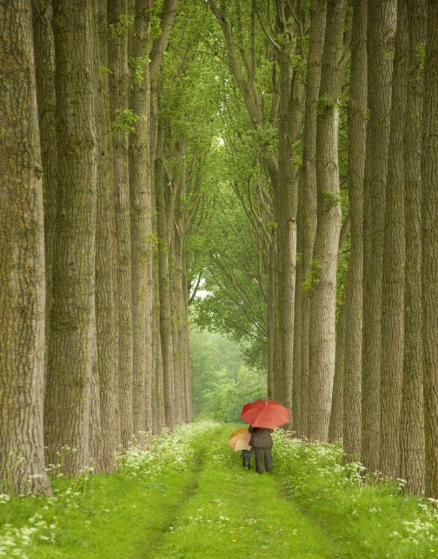Two Umbrellas, Belgium
