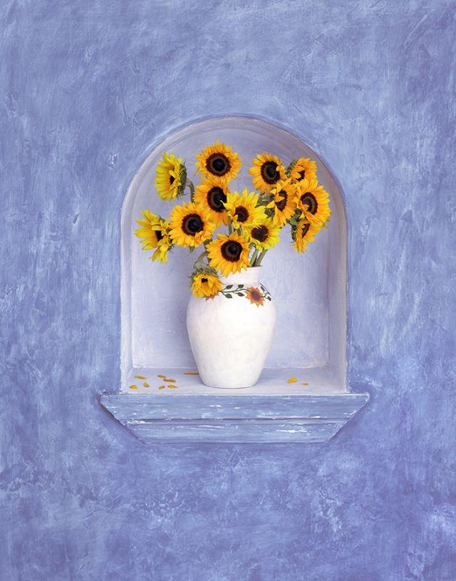 Sunflowers, Mexico
