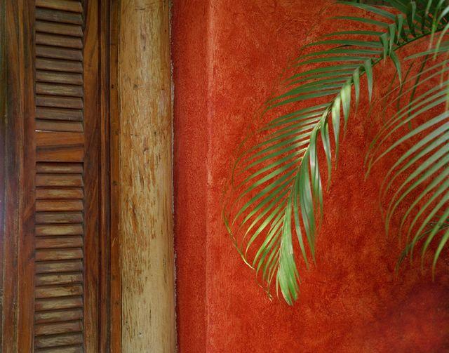 Palm, Mexico