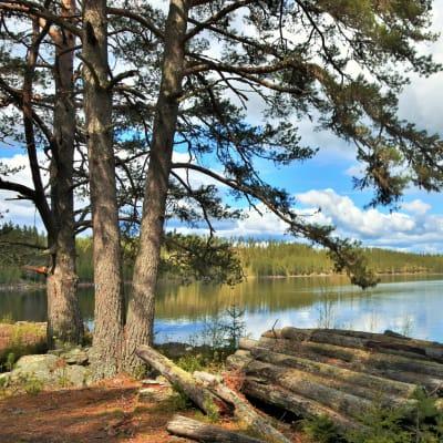Vandring på Finnskogen
