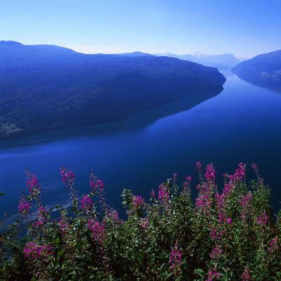 Fjord, fjell og Svanøy