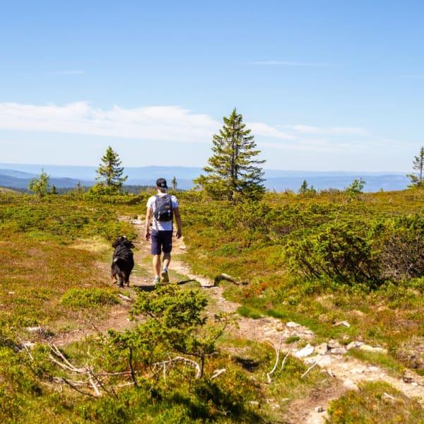 Vandring i vakre Trysilfjellet