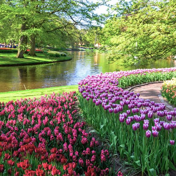 Holland i blomstring