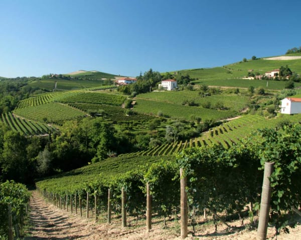 Familiedrevet vingård, hotellets vinkjeller og festmiddag (F, L, M)
