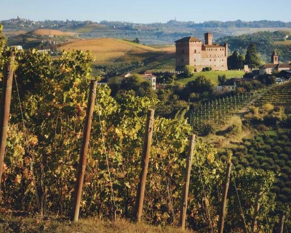 Besøk Grinzane Cavour, trøffeljakt og vinsmaking (F)