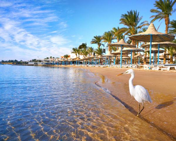 Hurghada (F, M)