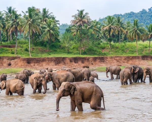 Kandy � Pinnawala � Negombo (F, M)