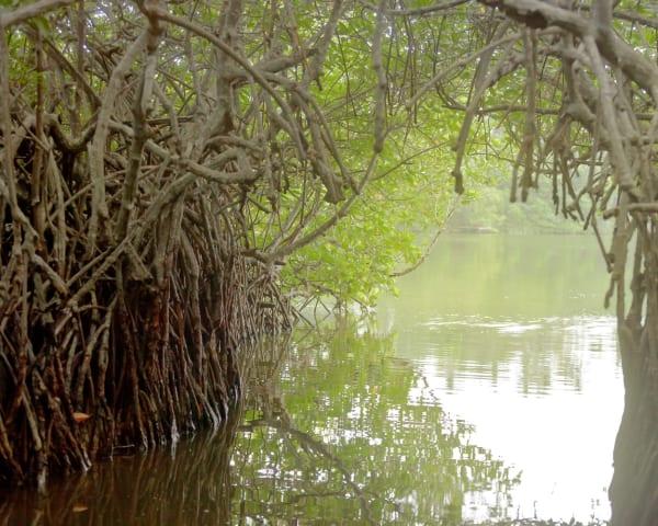 Hikkaduwa � Madu River (F, M)