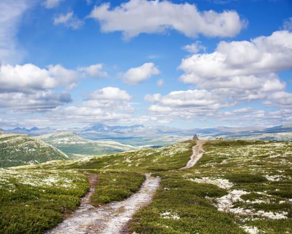Vandring i Rondane (F, ML, M)