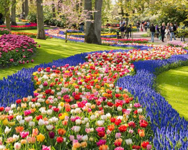 Ankomst Amsterdam og Keukenhof blomsterpark (M)