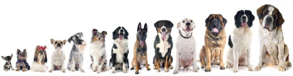 psy obrázok