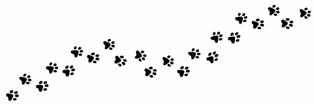 psie labky