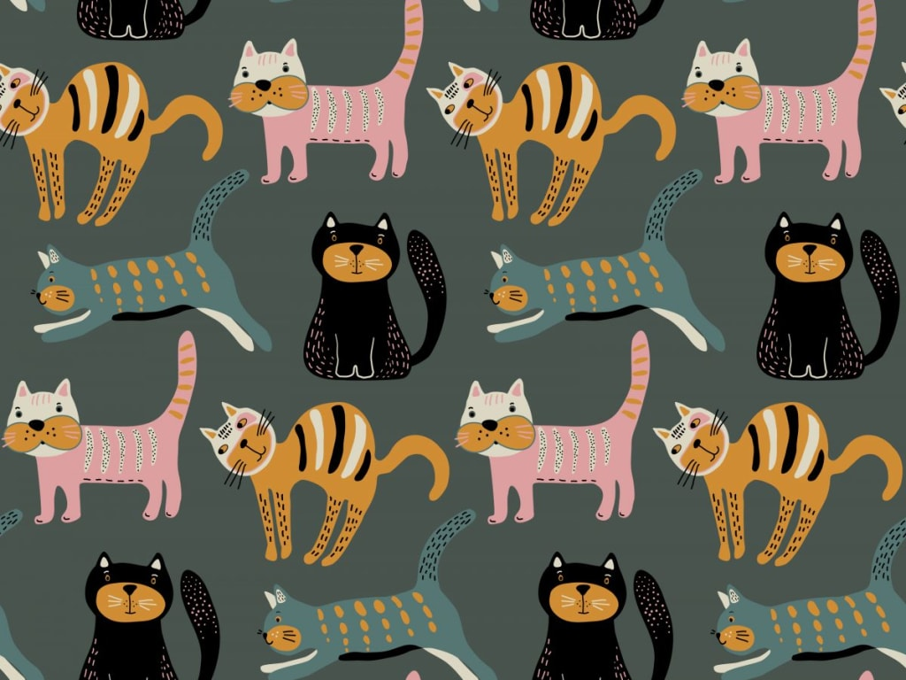 koláž mačky