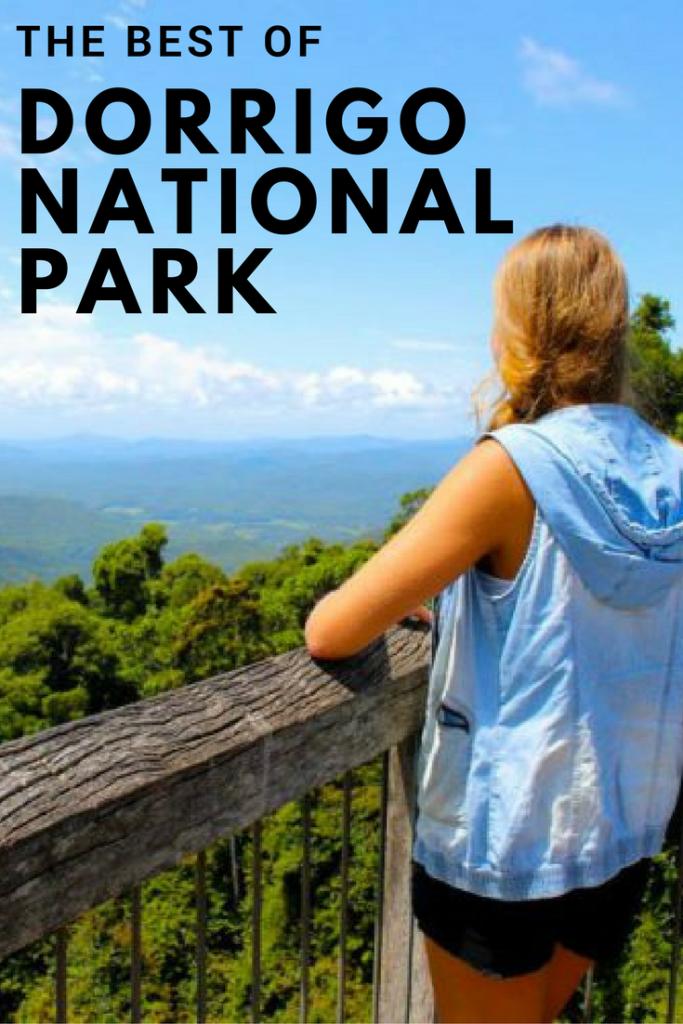 The best things to do in Dorrigo National Park