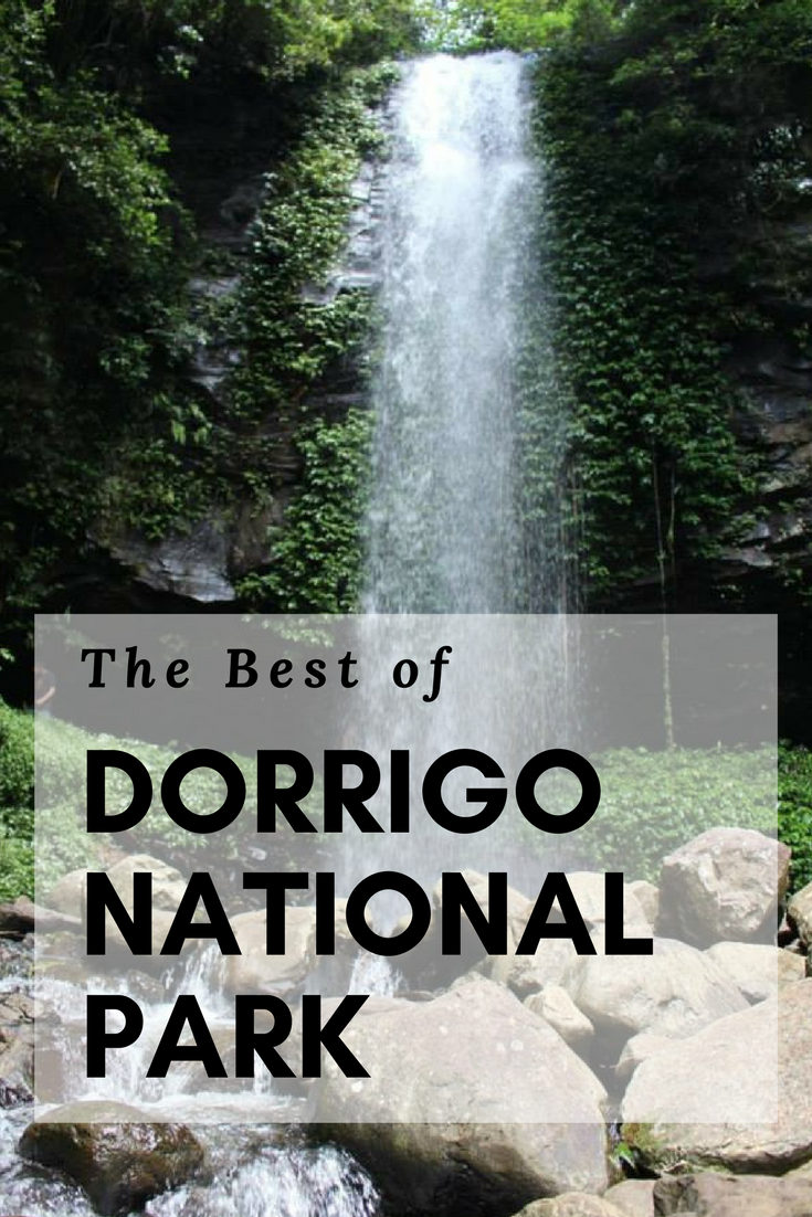 The best things to do in Dorrigo National Park