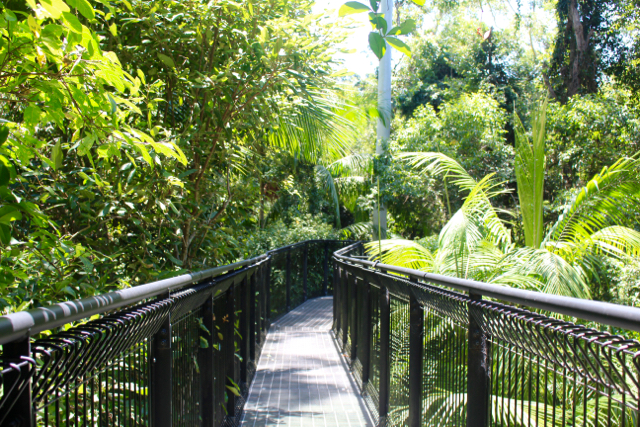 Mount Tamborine Skywalk