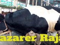Highest Price: Tk. 28 Lakh for Big Bull 'Bazarer Raja'