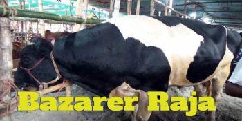 Highest Price: Tk. 28 Lakh for Big Bull 'Bazarer Raja'