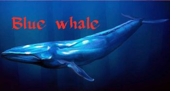 Blue Whale: Mobile operators' night internet offers stop