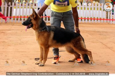 Dog Tales || Gallery