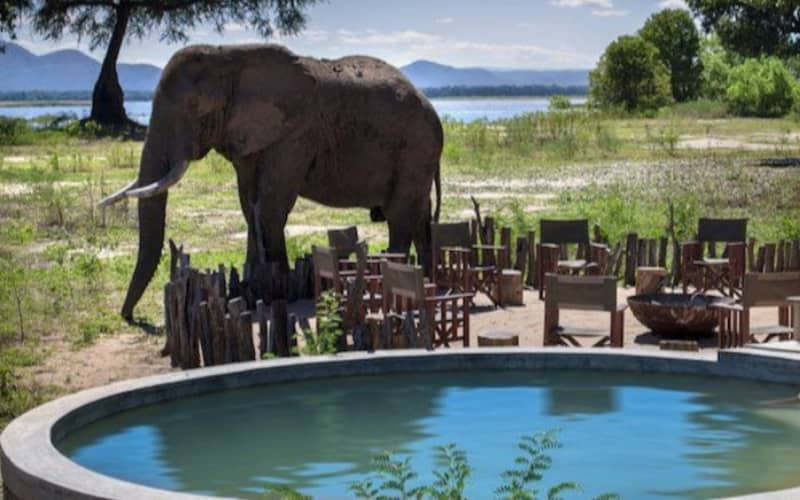 Simbavati Camp George: 1 Night Luxury Stay for 2 people + Meals & 2 safari activities per day!