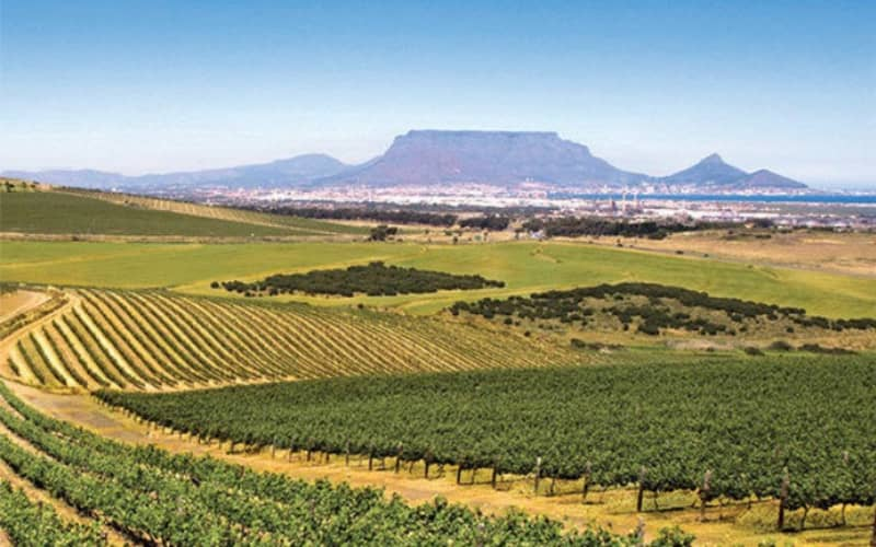 DURBANVILLE Winelands HELICOPTER TOUR for 4 to Durbanville Hills or De Grendel!